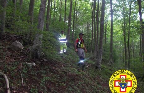 Nei boschi per raccogliere castagne disperso un 73enne for Raccogliere castagne