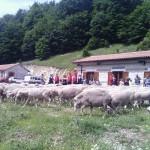 Uno spettacolo sorprendente quello di Roccamandolfi, evento senza precedenti, con centinaia di pecore che hanno […]