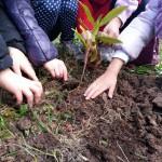 Torna in tutta Italia la Festa dell'albero organizzata da Legambiente. Tante, circa 500, le iniziative […]