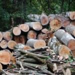 Al fine di tutelare il ricco patrimonio ambientale e contrastare gli illeciti in danno al […]
