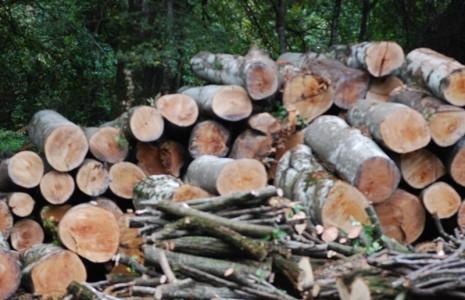 Share: Al fine di tutelare il ricco patrimonio ambientale e contrastare gli illeciti in danno […]