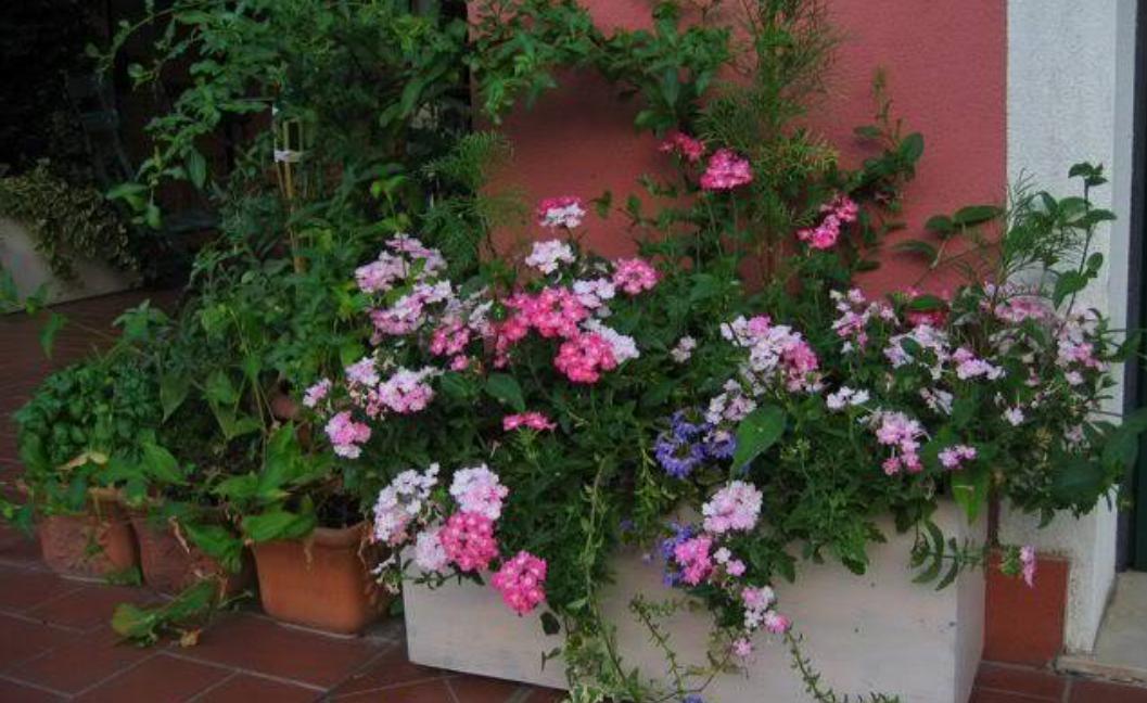 Clamoroso abbellire con vasi di fiori il portone di casa - Prostituirsi in casa e reato ...