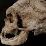 Un nuovo antenato dell'uomo, finora sconosciuto, è stato individuato nel Dna di individui che vivono […]