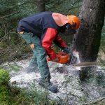 Nell'ambito delle attività di polizia forestale svolte nei territori rurali e montani, una pattuglia del […]