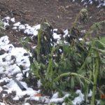 Il Comune di Jelsi informa le imprese agricole operanti sul territorio che possono segnalare i […]