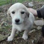 Appello per tre cuccioli di cane che sono stati abbandonati in strada a Villacanale, frazione […]