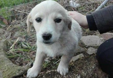 Share: Appello per tre cuccioli di cane che sono stati abbandonati in strada a Villacanale, […]